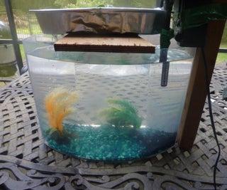 Easy and Cheap DIY Aquaponics!