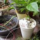 Butch - Remote Soil Monitor Watchdog