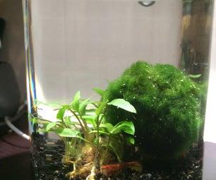 Build an aquatic ecosphere