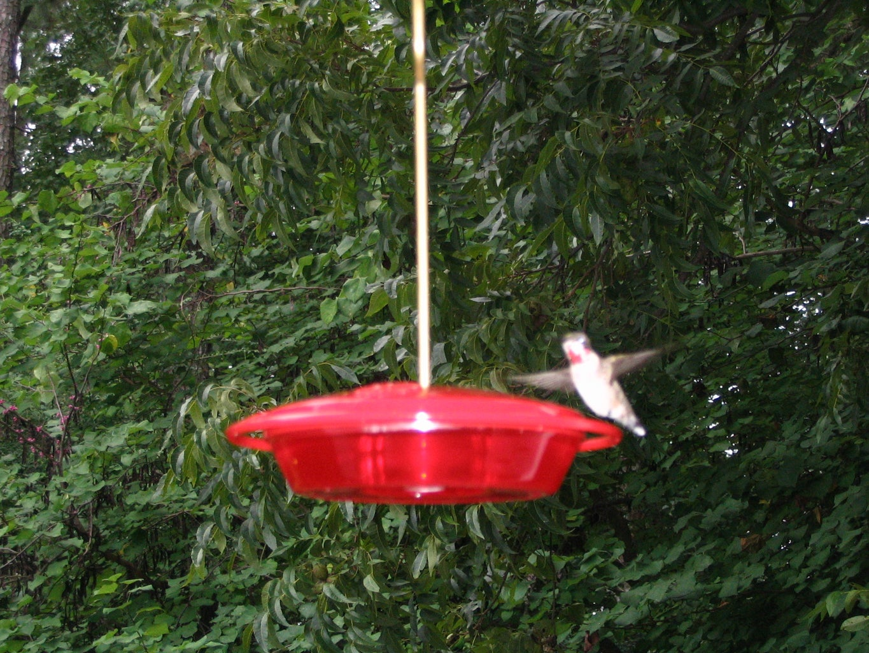 Hummingbird Shooter