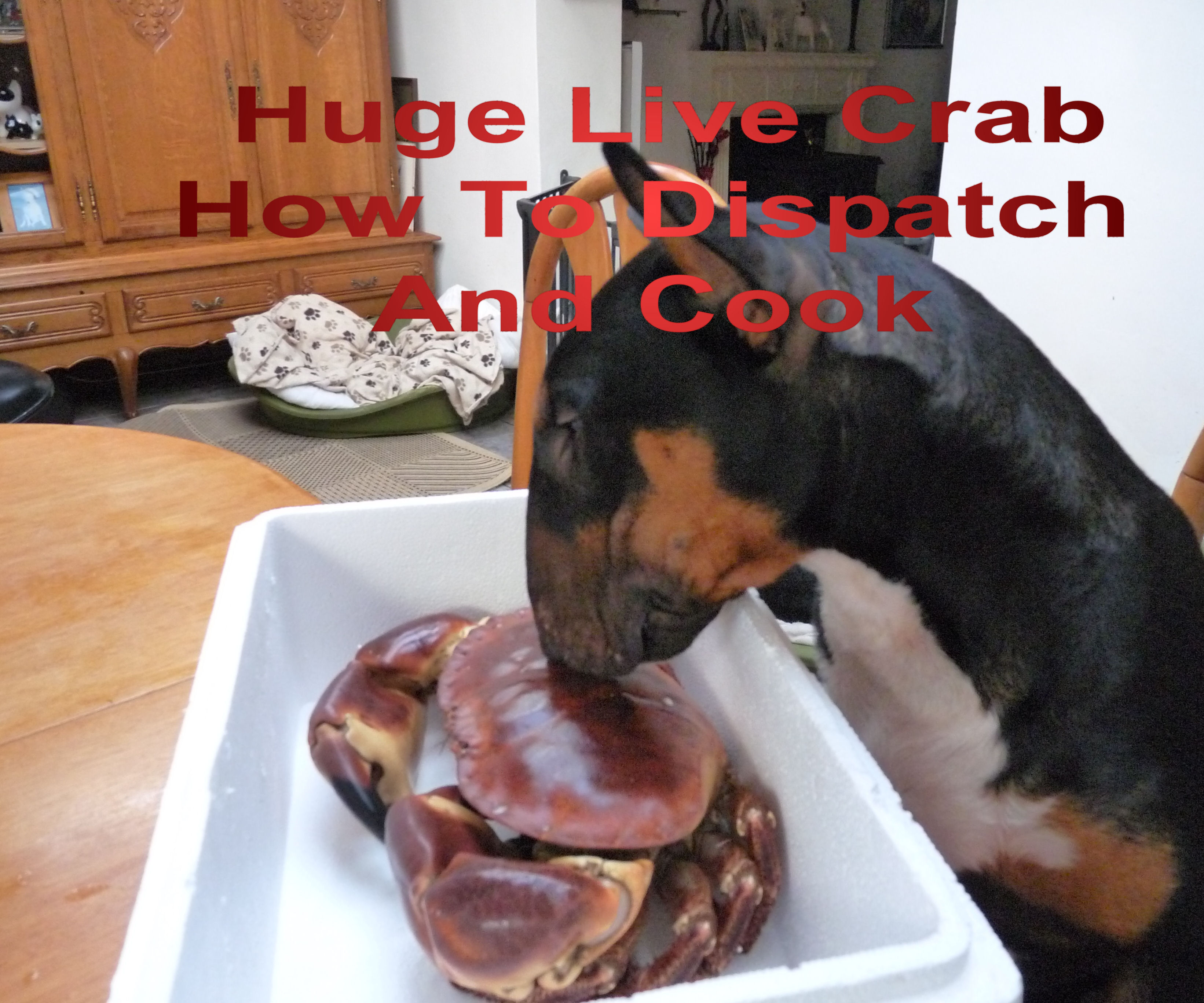 Live Crab How To Kill Instantly and Humanely Cooking Dressing and Eating