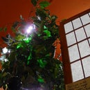 Peace Tree - an Internet-responsive String of Lights