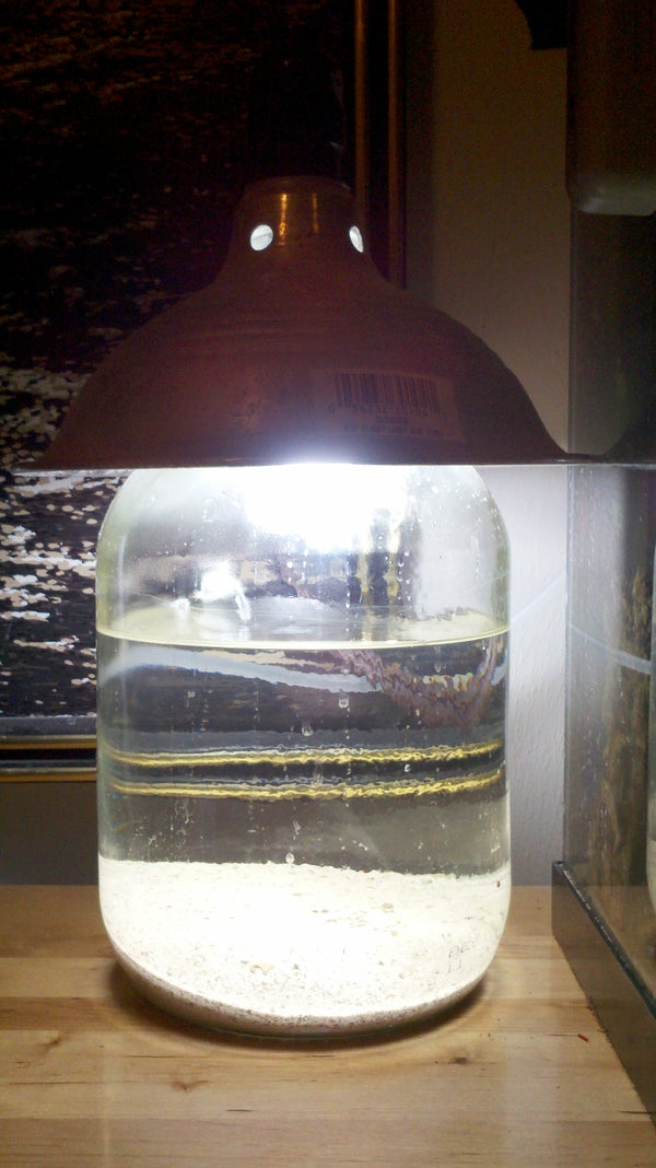 """""""Moonshine"""" Aquarium"""