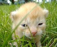 Help! My Kitten's Toe Has Fallen Off! (April Fool's Prank)