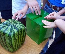 Grow a Square Watermelon