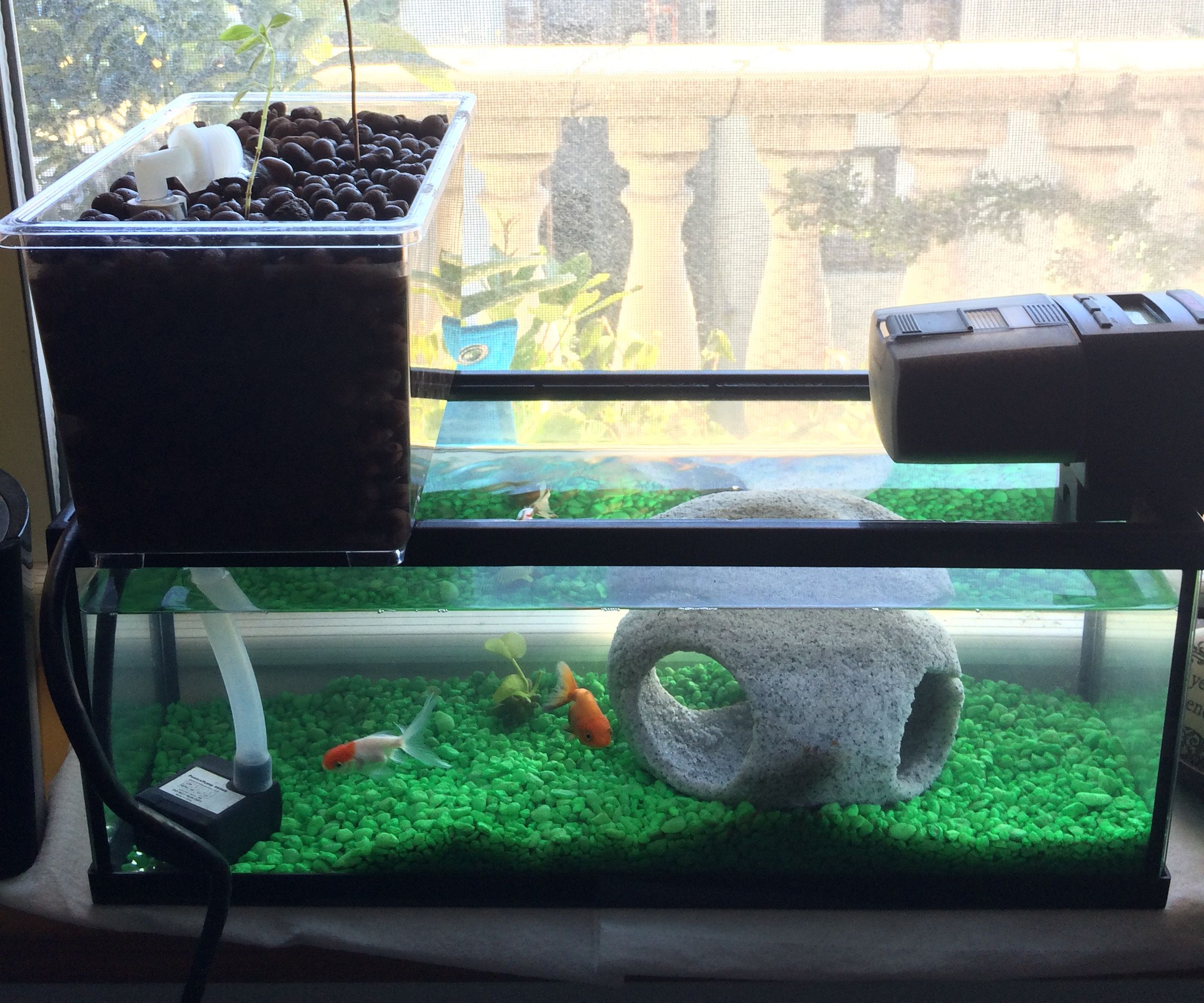 Windowsill Aquaponics System