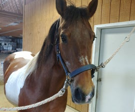 How to Groom a Horse Before Riding