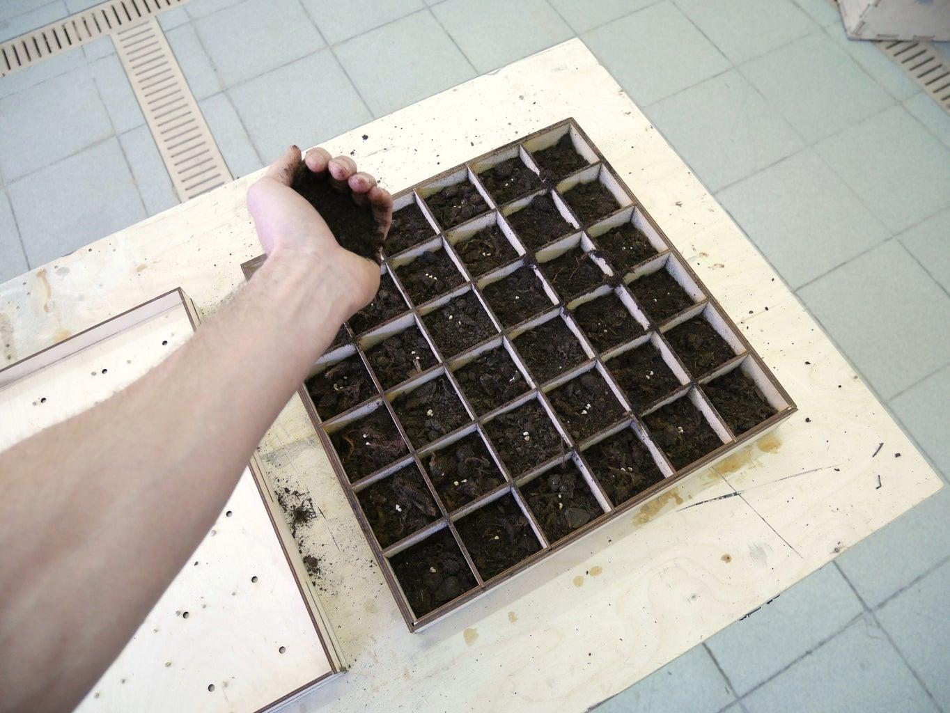 Make the Seedlings