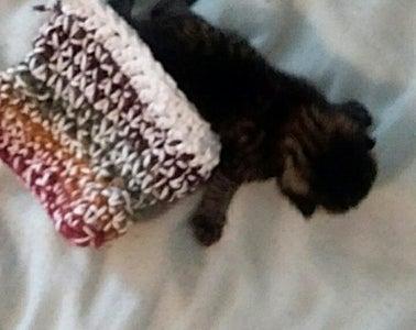 Kitten Cozies (Hamsters, Mice, Guinea Pigs, Ferrets Too!)