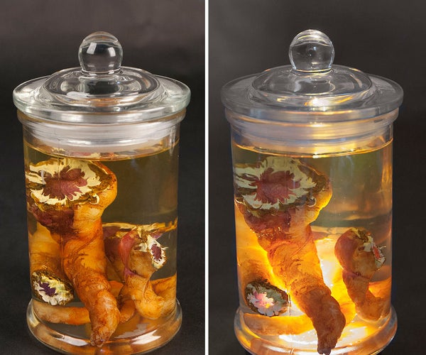 Parasitic Worms Specimen Jars