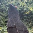 Raven Pi Security Camera