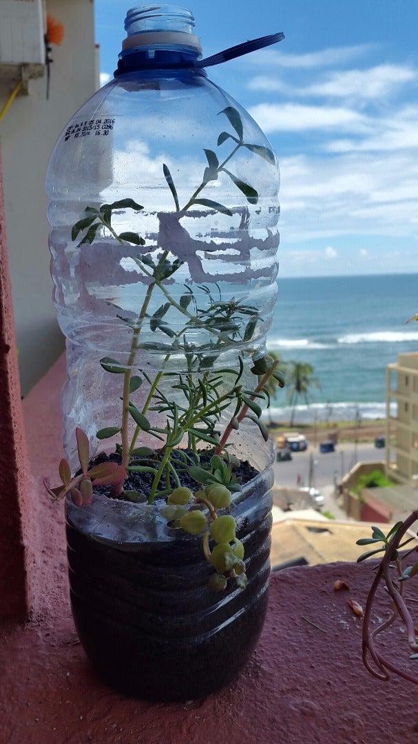Garden in a Plastic Bottle