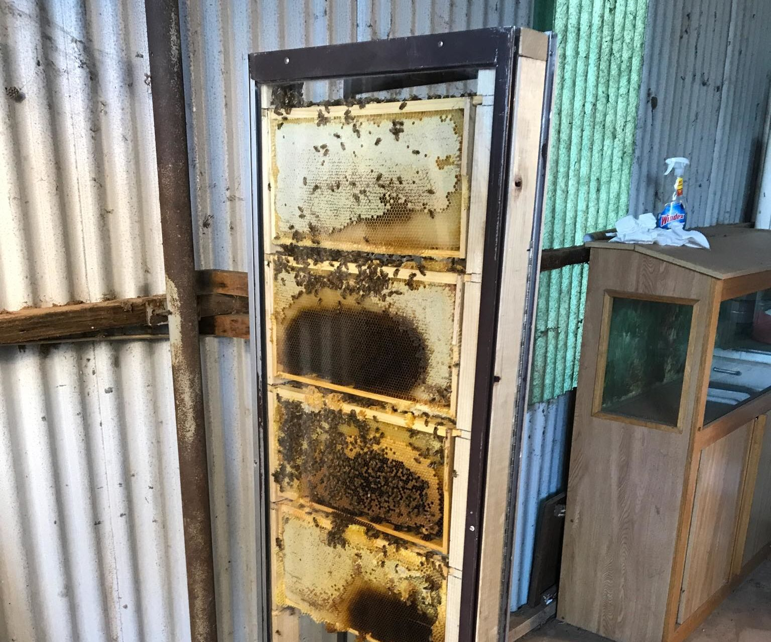 How to Build an Observation Bee Hive