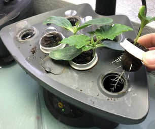 Aerogarden Grow Pods Using Old Coffee K-Cups
