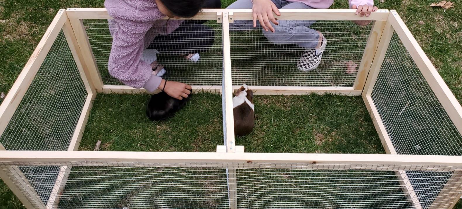 Simple, Cheap Guinea Pig Run