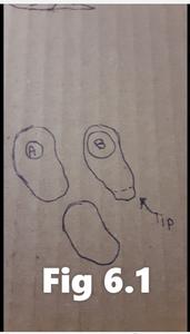 Upper Arm and Leg