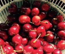 Homemade Cherry Moonshine (Classic Cherry Brew)