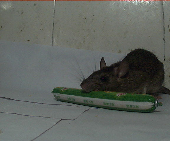 Say Hello with My Roommate Mouse with Arduino