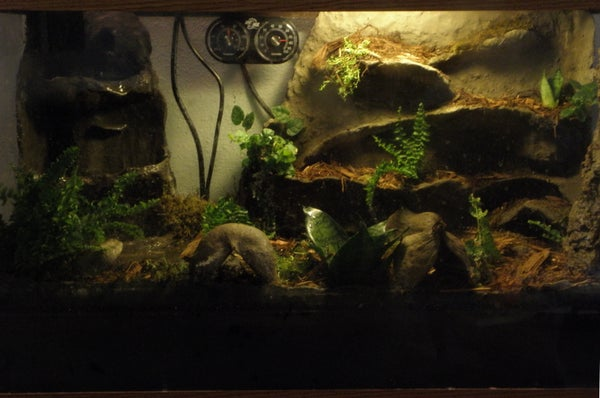 Terrarium / Vivarium Waterproof Rock Work for Frogs and Amphibians