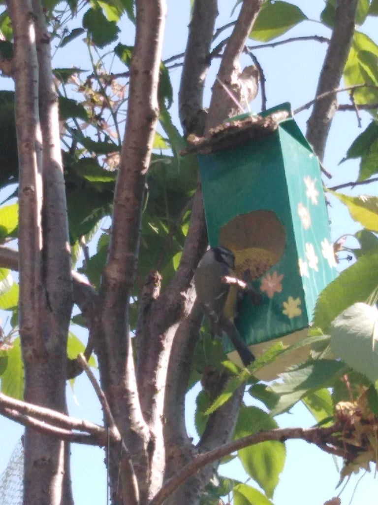 Find a Place Away From the Cats Where the Birds Can Eat Peacefully and Enjoy the Show !