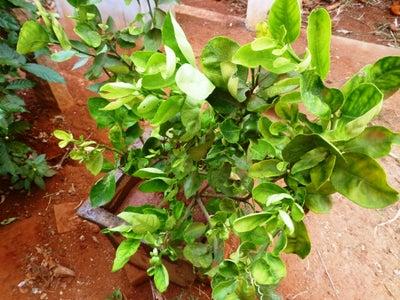 Plant and Enjoy