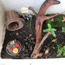 Terrarium for My Pet Snails