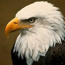 EagleDude
