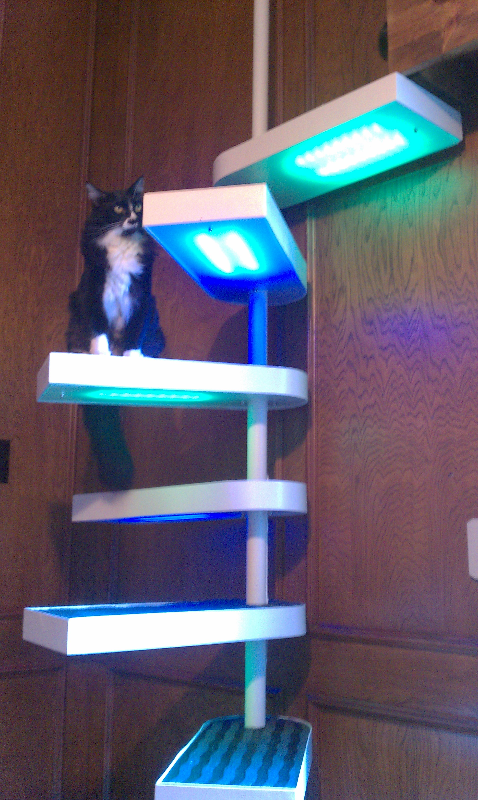 Picture of: Cat Staircase Deluxe 25 Steps With Pictures Instructables