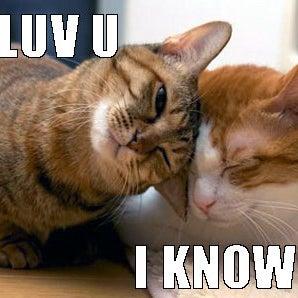i-luv-u-i-know-star-wars-reference-funny-cat-meme-online-casino-real-money.jpg