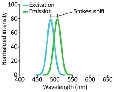 Fluorescence Microscopy Overview