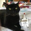 Free Halloween Black Cat-A-Pult Papercraft