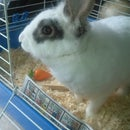 Keeping your rabbit's bedding dry