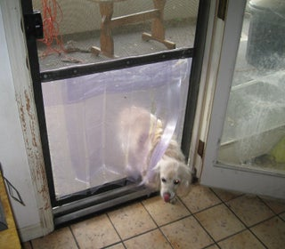 Easy Inexpensive Doggy Door In A Screen Door 6 Steps With Pictures Instructables