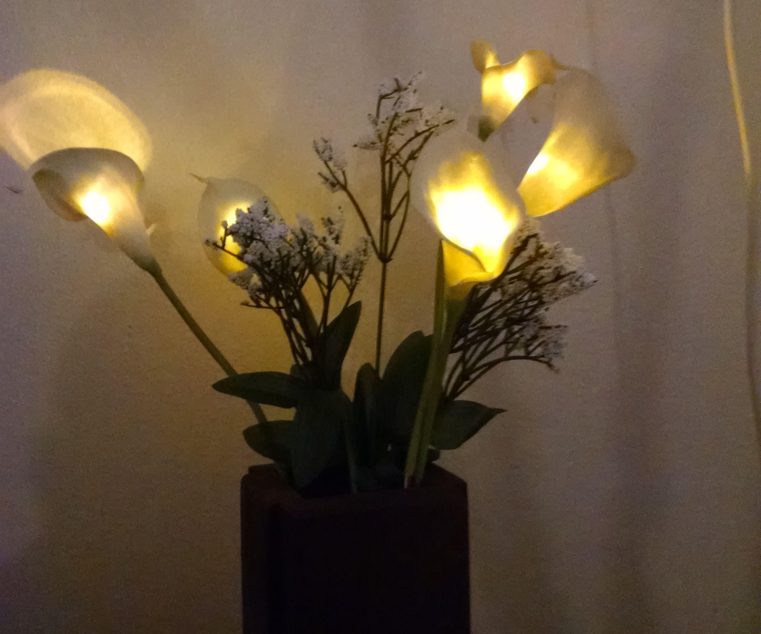 Phoenix Fire Lily