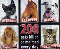 The Biggest Animal Abuses people Contribute to Everyday