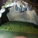 Diorama, Bat in the cave