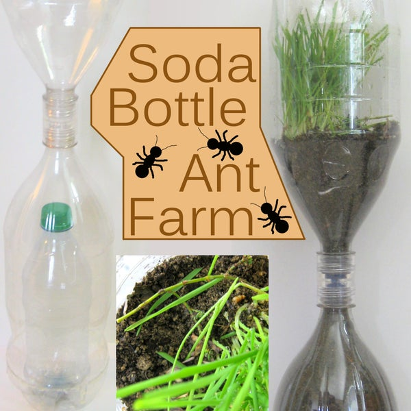 Soda Bottle Ant Farm