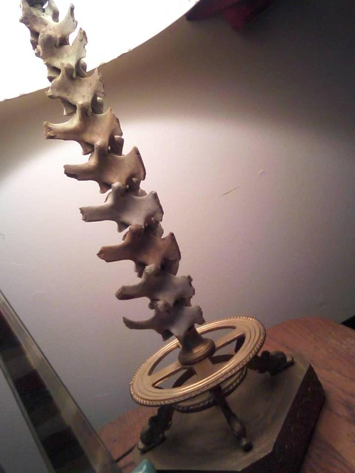 Deer Bone Lamp