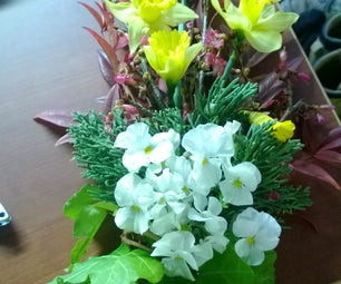 Winter's Flowery Bouquet to Usher in Spring
