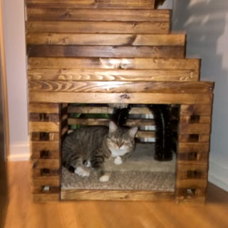 The Cats Tower