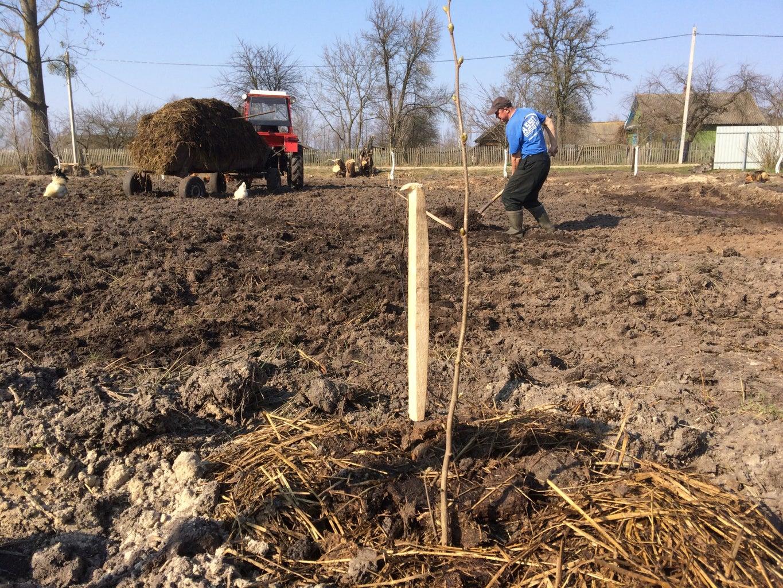Planting the Second Half