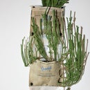 DIY Hanging Planter Made From Hand-Rolling-Plastic-Tobacco-bag