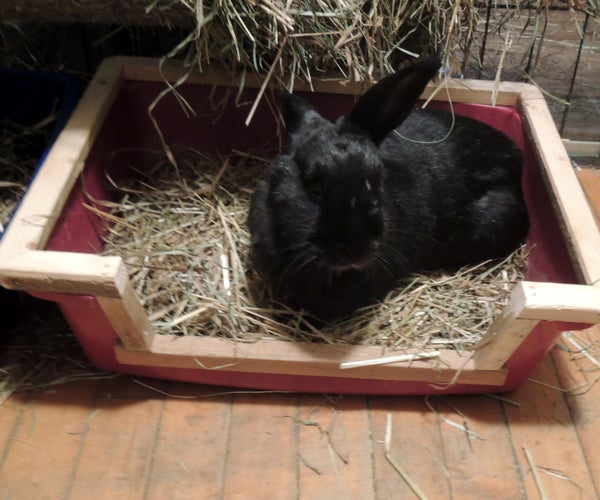 Souped Up Cat/Bunny Litter Box W/ Handicapped Access