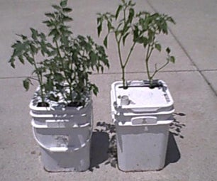 How to Make a Single-Bucket Self-Water Regulated Vegatable Planter