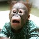 Orangutanlibrarian