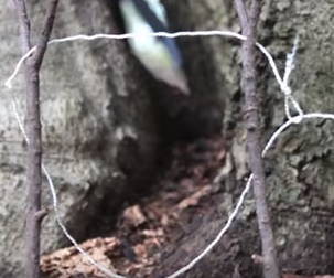 The Basic Paracord Survival Snare
