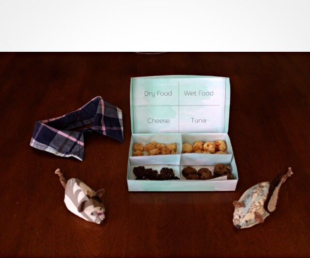 Cat Toys and Treats Gift Set