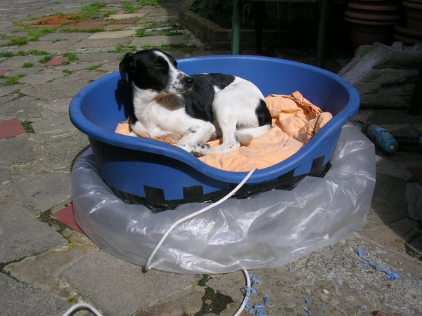 Hovercraft Dogs Bed