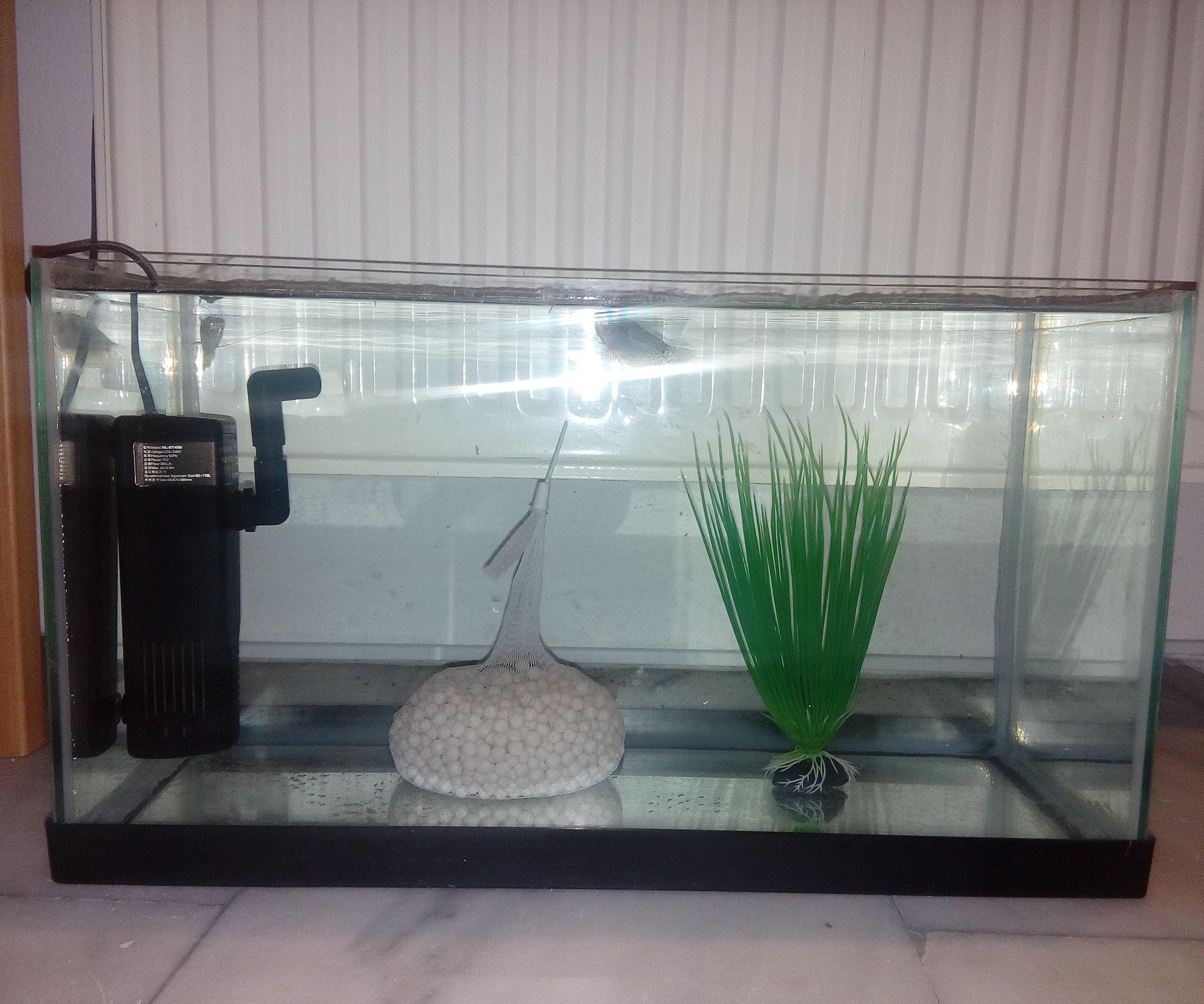 How to Re-seal an Aquarium.