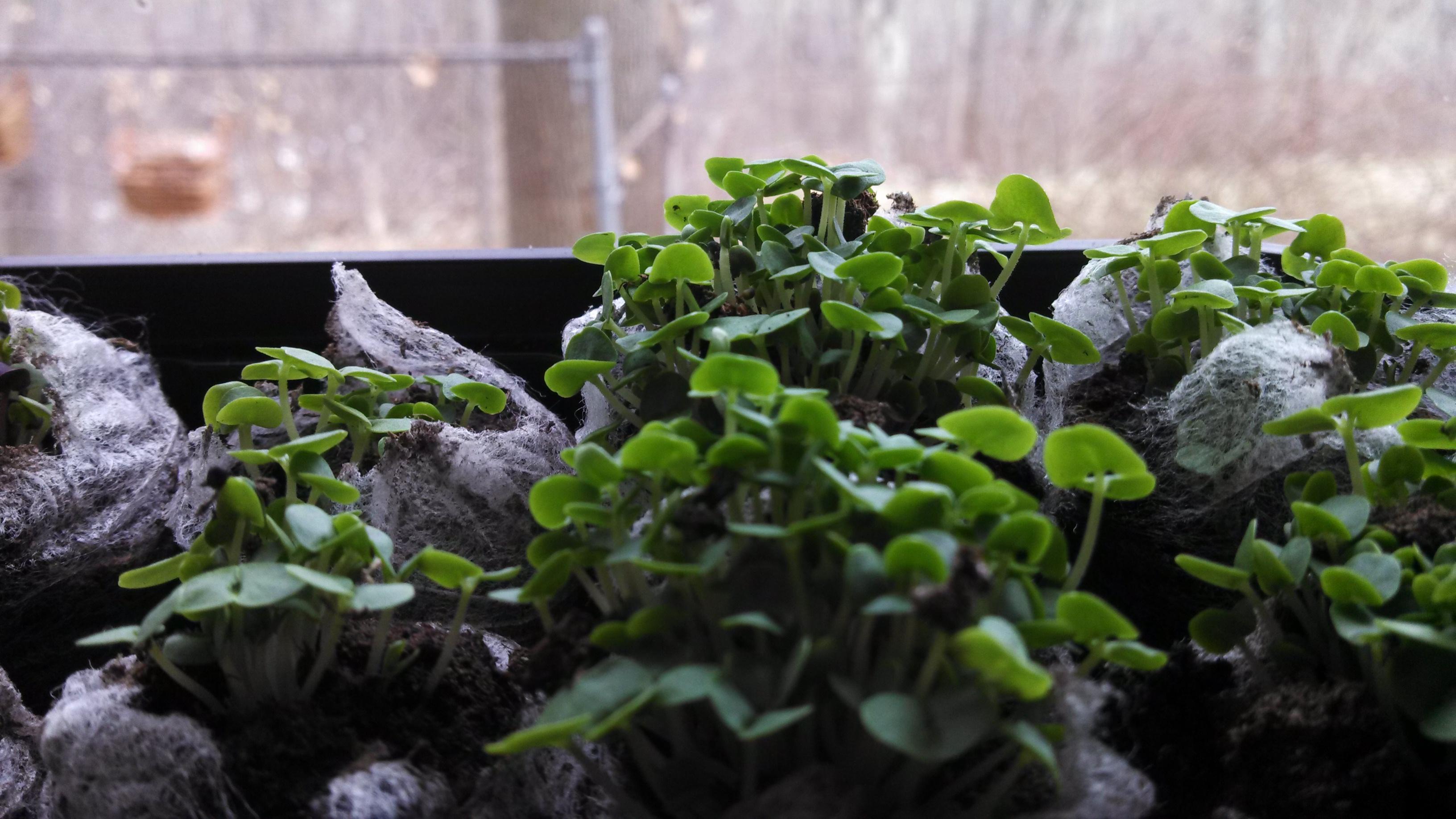 Organic window gardening